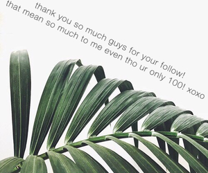 background, followers, and green image