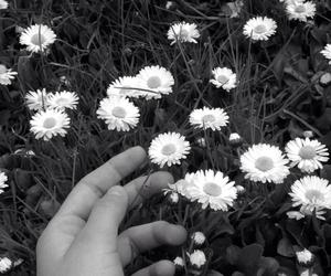 black. &. white. flower. image