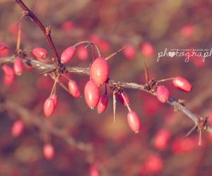 autumn, red, and retro image