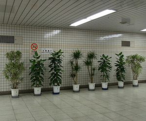 are, aesthethic, and plants image