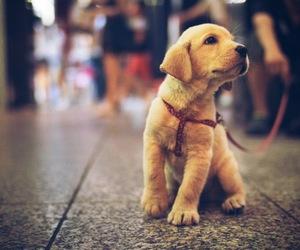 pet and dog image