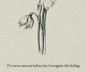 quote, Lang Leav, and poetry image