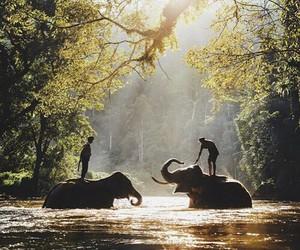elephant, nature, and animal image