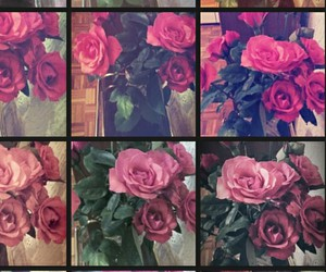 pink, love, and roses image