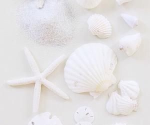 shell, white, and beach image