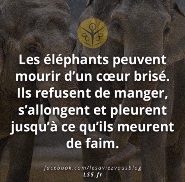 Image About Elephants In Citation Texte Phrase By