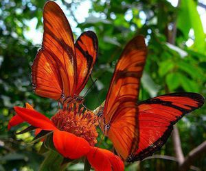 butterfly and flower image