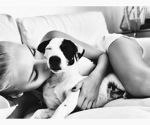 animal, black and white, and puppy image