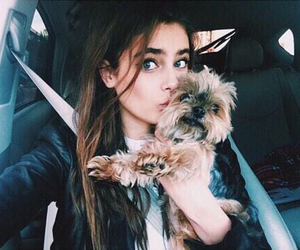 dog, model, and taylor hill image