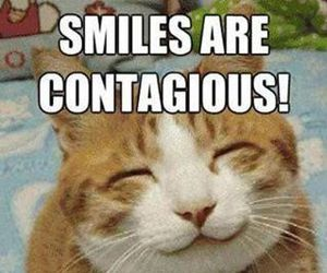 funny, cat, and smile image