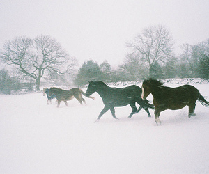 animal, horse, and forest image