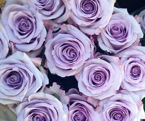purple, roses, and cute image