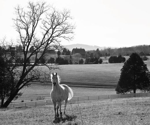 black&white, horse, and equestrian image