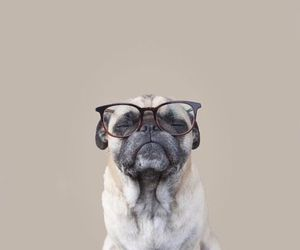 dog, pug, and animal image