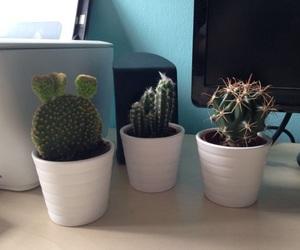 cacti, cactus, and mini cactus image