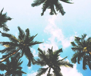 blue, cool, and palmtrees image