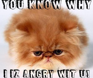 angry cat, meow, and funny cats image