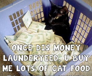 cat, laundry, and funny cats image