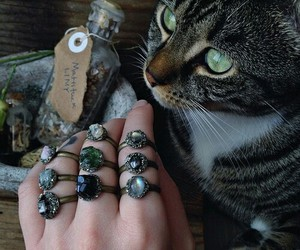cat, rings, and animal image