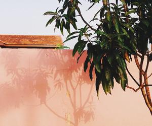 theme, orange, and peach image
