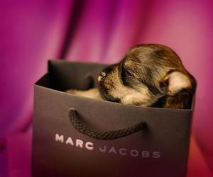 cute, puppy, and marc jacobs image