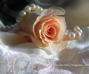 pretty and rose image
