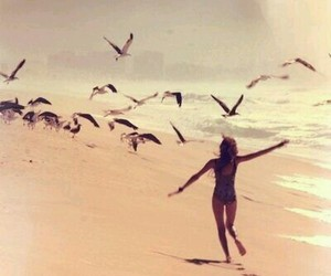 beach, summer, and bird image