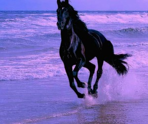 horse, beach, and black image