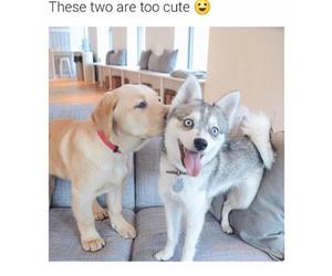 dog, kiss, and love image
