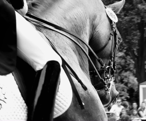boot, detail, and dressage image