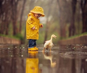 rain, cute, and duck image