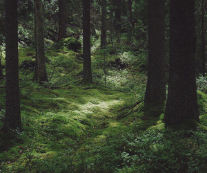 forest, nature, and explore image