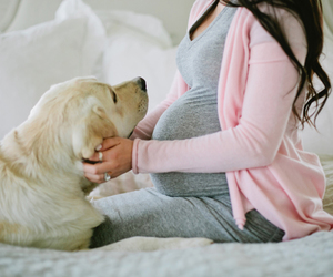 pregnant, dog, and outfit image