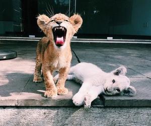 animals, grunge, and lion image