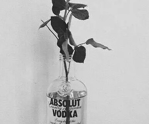 absolut vodka, black and white, and rosas image