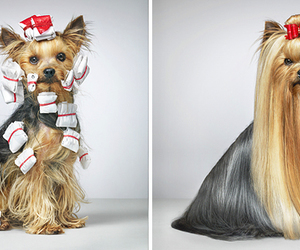 dogs and hair image