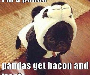 panda, dog, and cute image