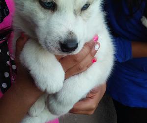 blue, blue eyes, and dog image