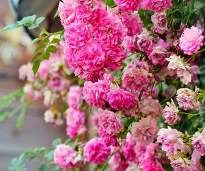 background, pink, and flores image