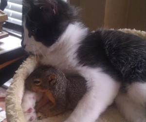 cat, funny, and squirrel image