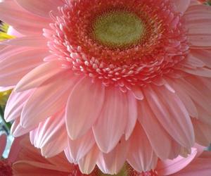flor, flower, and rosa image