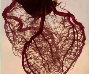 heart, blood, and veins image