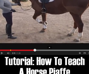 horses, horse care, and horse tips image
