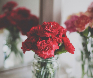 carnation and clavel image