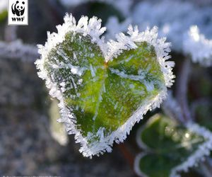 frozen, green, and heart image