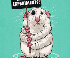 experiment, animal, and rat image