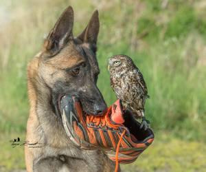 bird and dog image