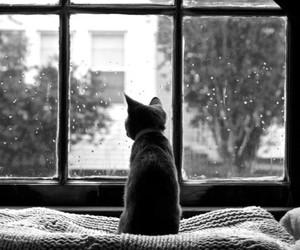 cat, animal, and rain image