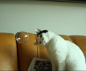 bubble, cat, and cute image
