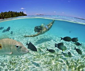 beach, diving, and fish image